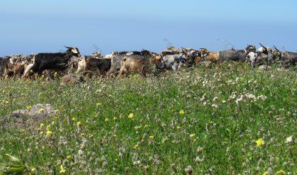 Venta de leche cruda desde las ganaderías